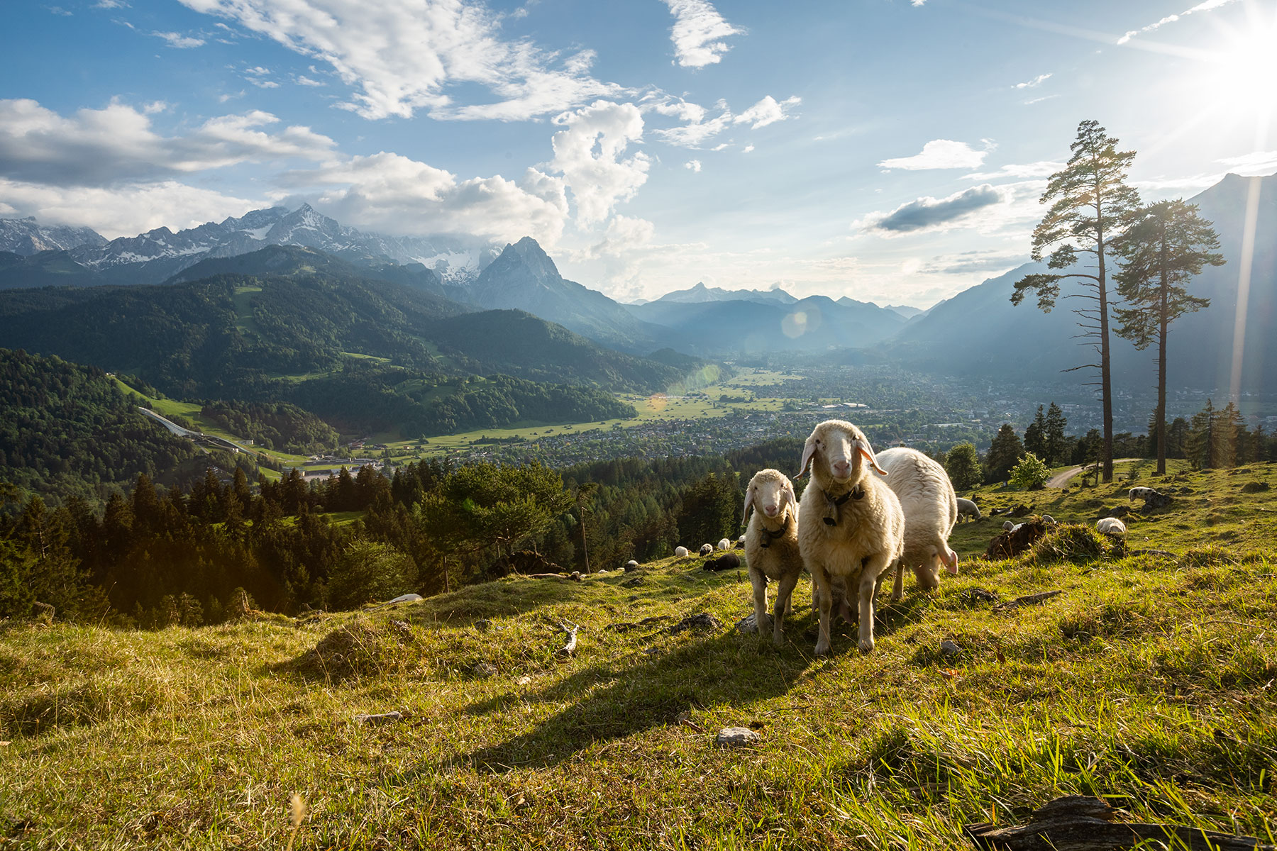 sheep_wank_garmisch.jpg
